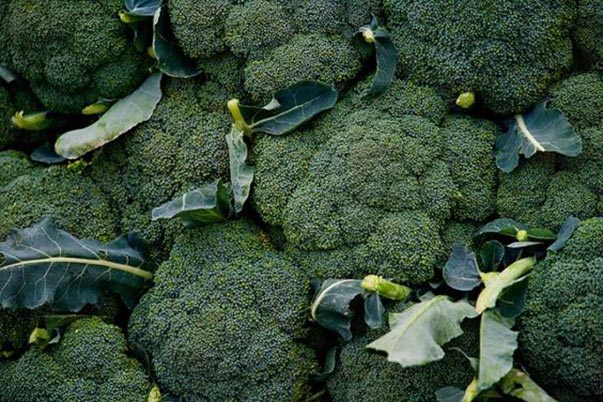 Broccoli growing techniques
