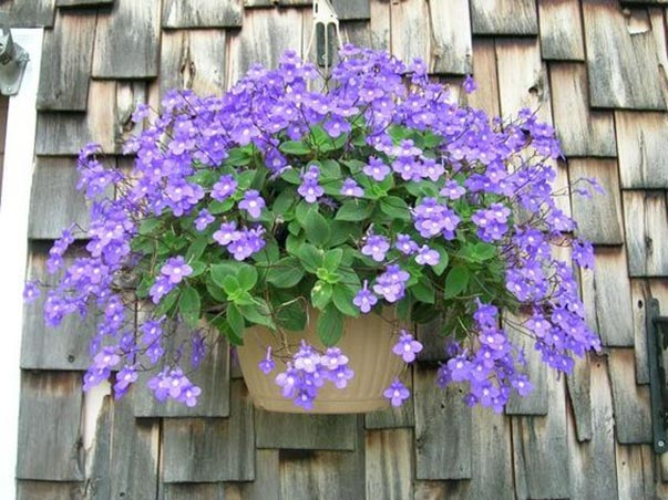 Key PointsWhat kind of flowers to grow indoors